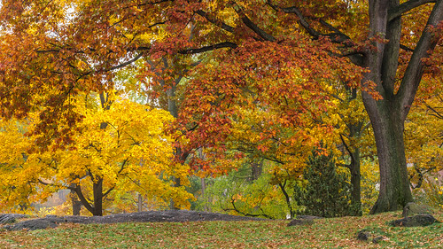 Autumn View - Central Park