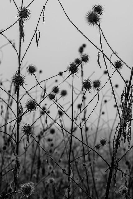 Herbstblobs
