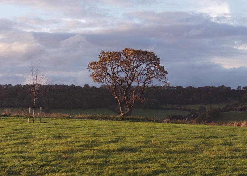 Yorkshore countryside views, Bumpkin Betty