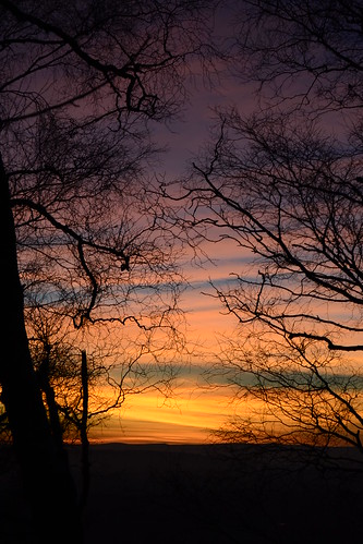 trees sunset silhouette herefordshire malvernhills 250l1