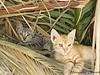 Mykonos Kittens
