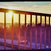 Sun and.. #  - Image006_7A - Fuji DL Mini DM Paradies200 - 2015