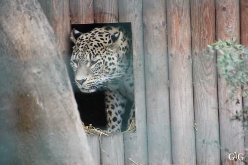 Sonntags Besuch im Zoo Berlin 25.01.2015 41