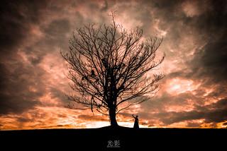 Lone Tree - The Summoning