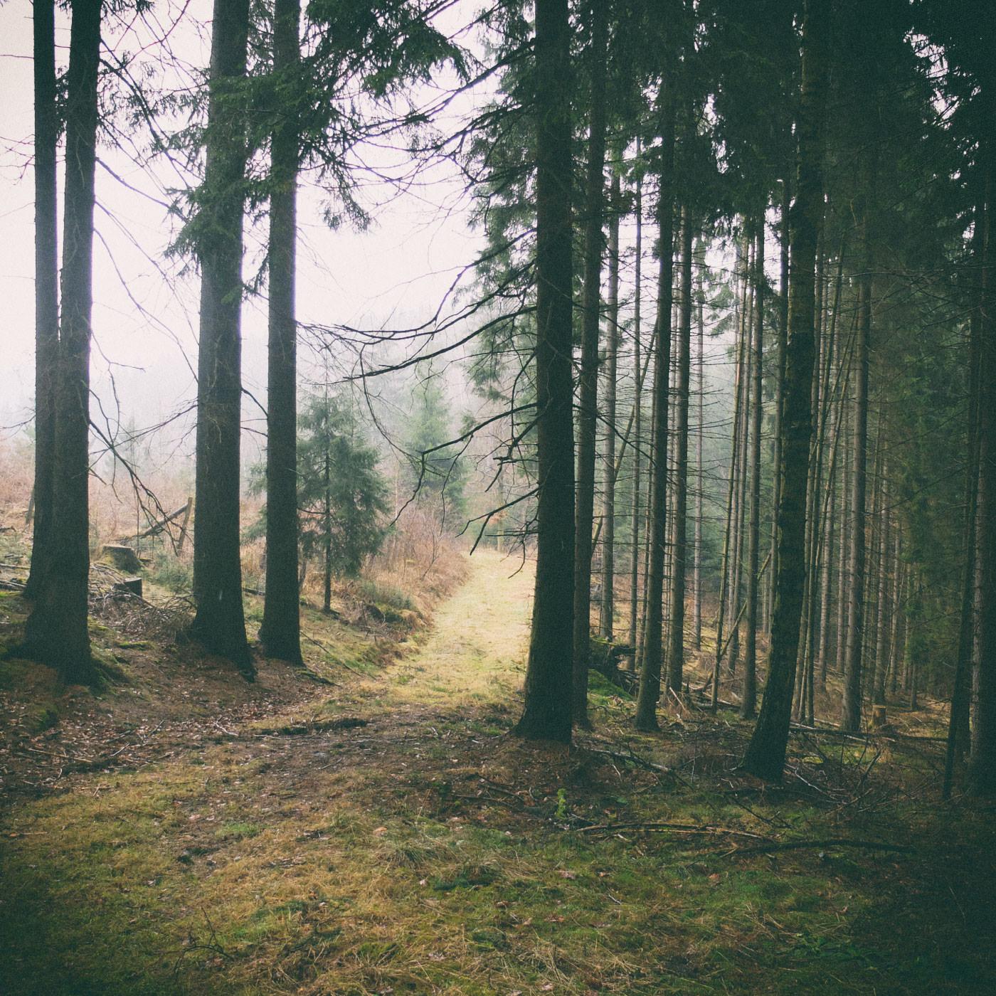 Ein Waldspaziergang