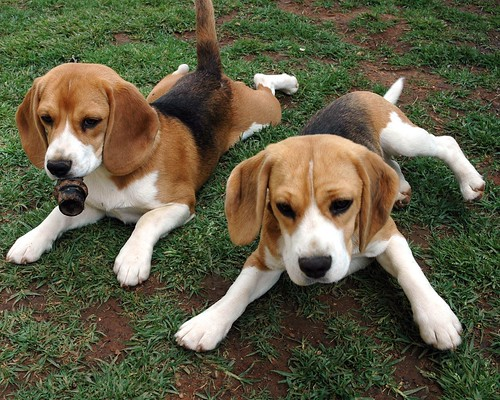 Joel Schlessinger donates to the Basset & Beagle Rescue of the Heartland