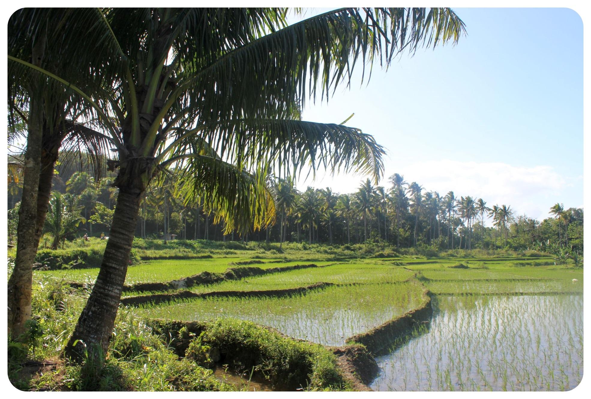 bohol rice fields philippines