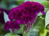 Botanic Gardnes-045