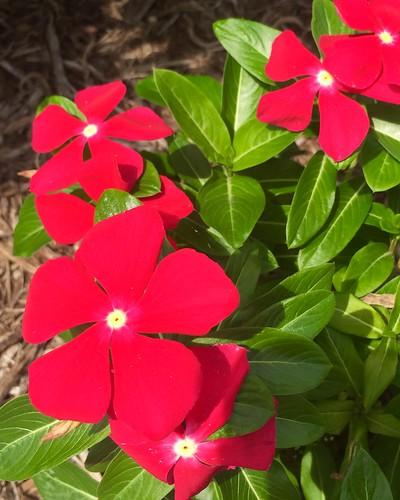 Butterflies in the Herb Garden