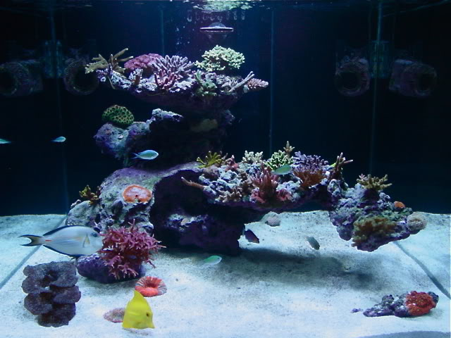 Reefscape Uncertainty Aquascaping Forum Nano Reef Com Forums