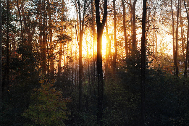 Sunrise in my forest