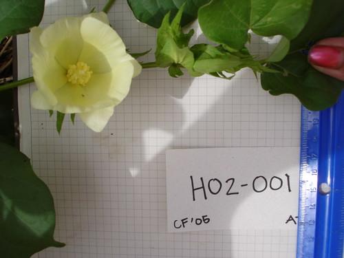 H02-001 CF05 Fl2