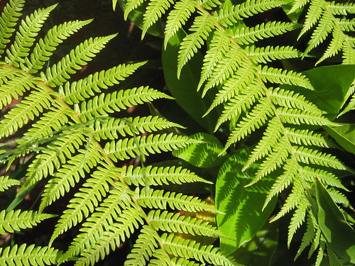 Fern Leaves Pattern