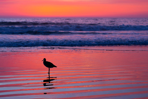 sunset bird venicebeach f56 manualfocus mirrorless canonnfd50mmf14 metabones erniemelendrez sonya6000