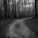 The Creepy Path - Adkins Arboretum by Randall ]|[ Photography
