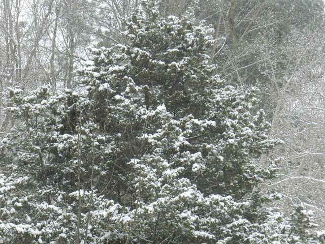 natureworldDSCN1271