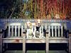 Porthos & Lucy Beagle | Pet & Dog Photography London