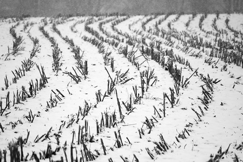 park winter bw white snow black cold nature monochrome field creek corn cornfield state pennsylvania january pa ridley 2015
