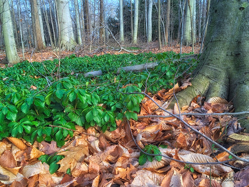 ohio ruralamerica pachysandra polandohio rurallandscapes ruralohio ohiowildlife polandforest
