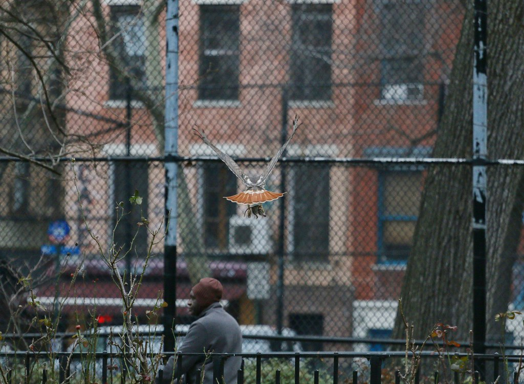 Christo flies a rat across Tompkins Square