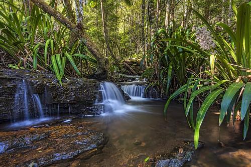 travel nature water fun nationalpark reisen flora rainforest walks australia waterfalls queensland wandern creeks autralia springbrooknationalpark longexposurephotography nikond800
