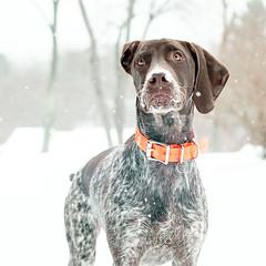 4021 Snow Puppy