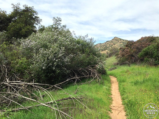 las virgenes canyon 24