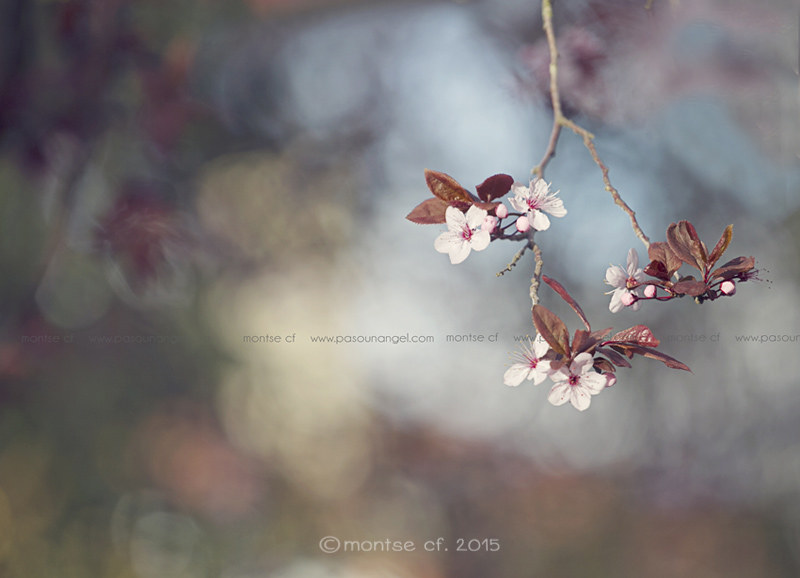 ++Hola primavera