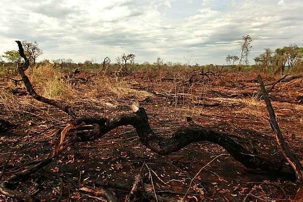 desmatamentodocerrado.jpg