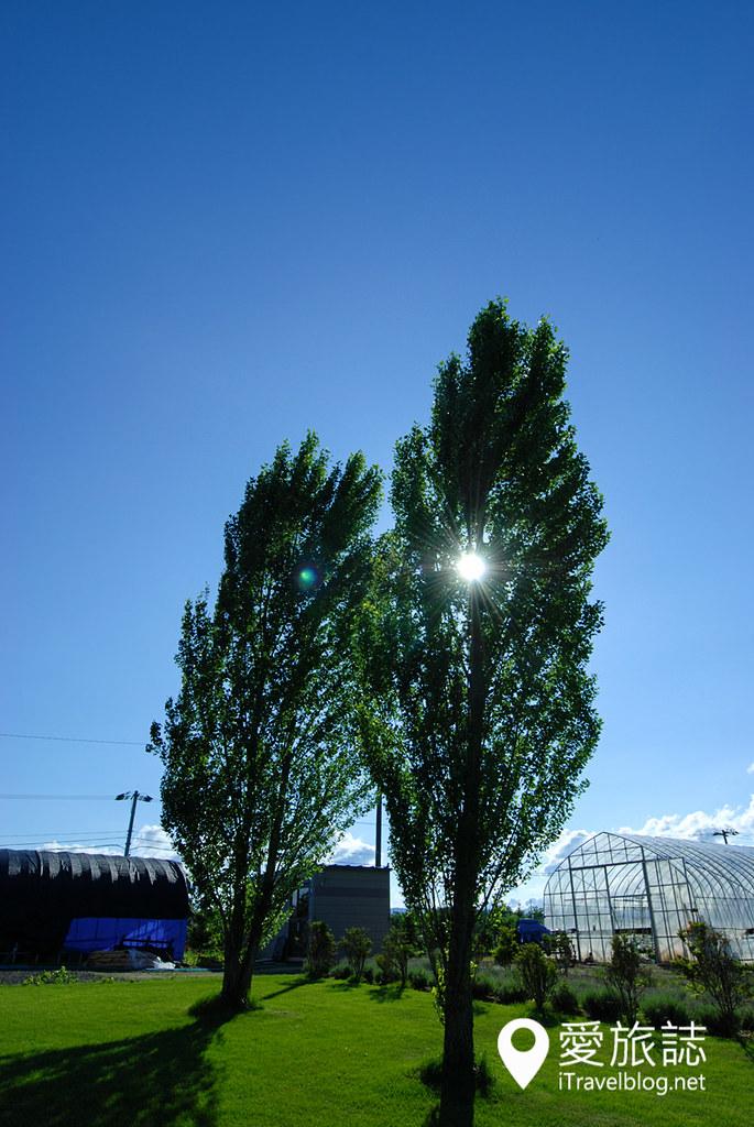 美瑛景点推荐 Ken & Mary之树 24