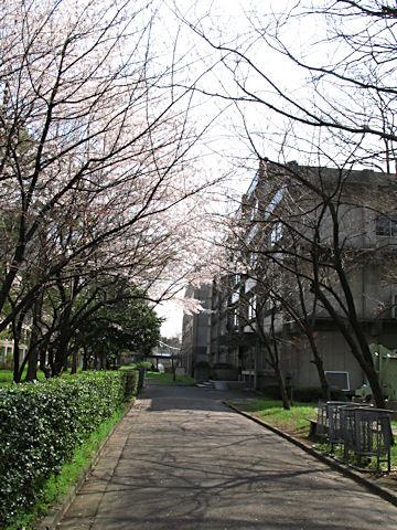 Japan_0017