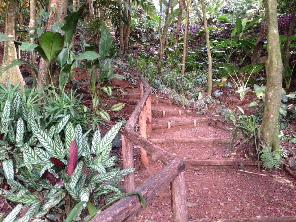 Rain forest path from guest house to main house and ponds