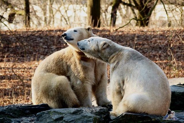 Tierpark Berlin 21.02.2015  021