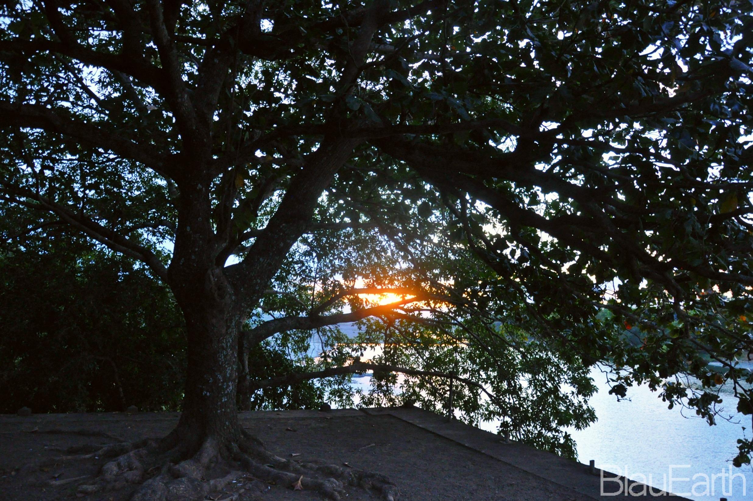 Tree at Vintar Dam