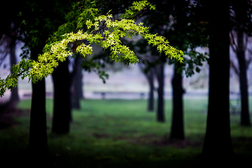 The Morning Green