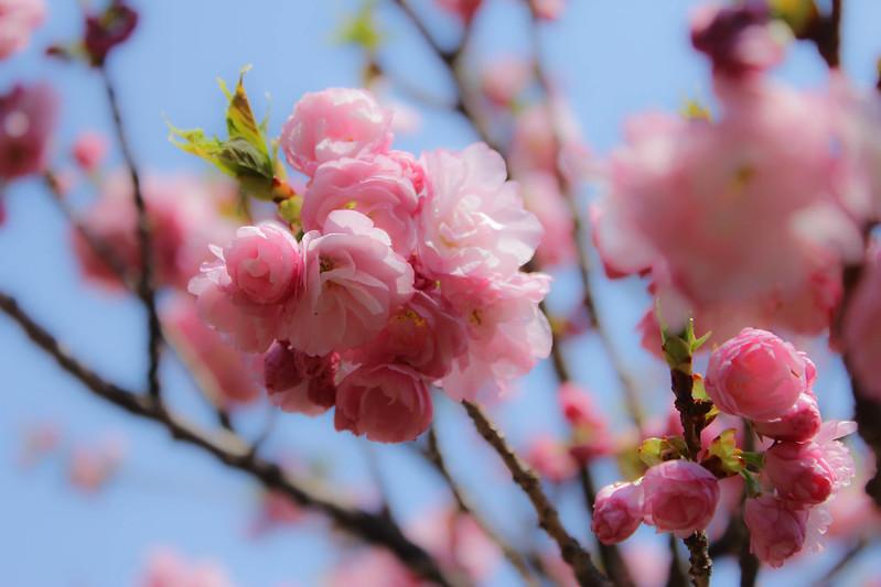 2014-04-19_00178_美の山.jpg