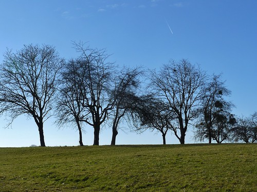 arbres sihouettes delle cielbleu belhiver