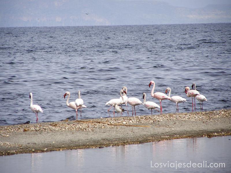 lagos de etiopia flamencos