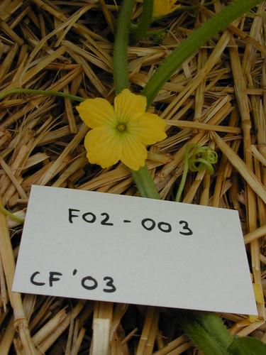 F02-003 CF03 Fl2