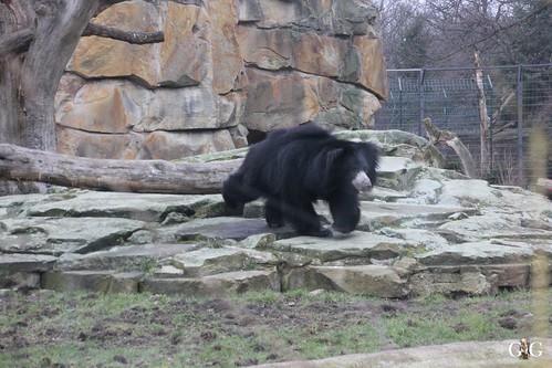 Sonntags Besuch im Zoo Berlin 25.01.2015 3