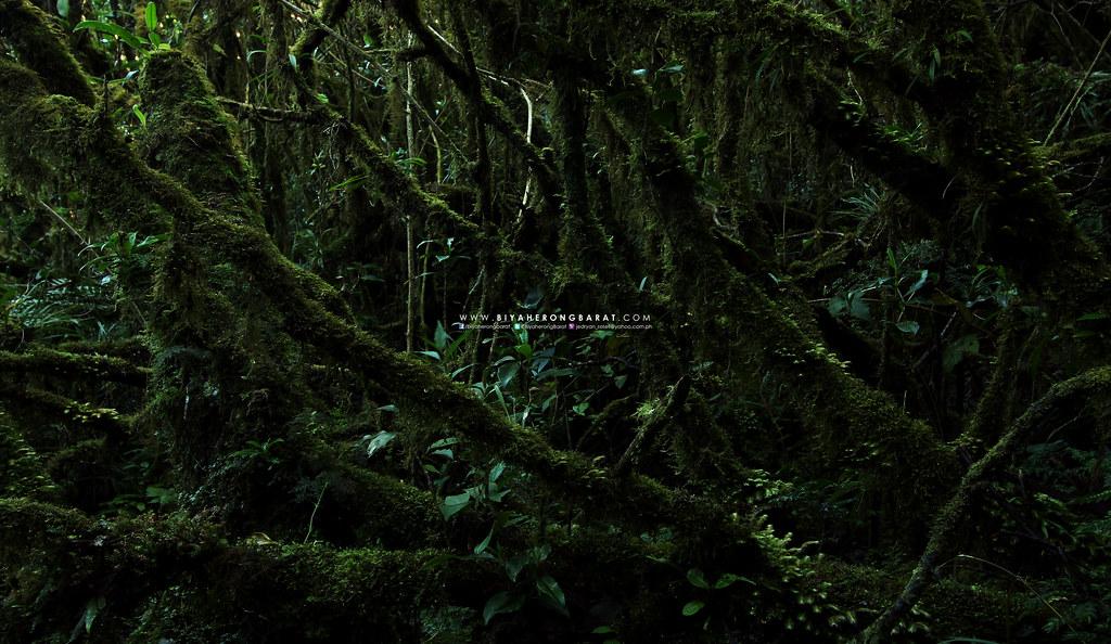 mossy forest mount tabayoc kabayan benguet