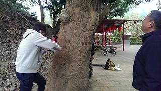 研究團隊測量樹圍;圖片提供:美濃愛鄉協進會。