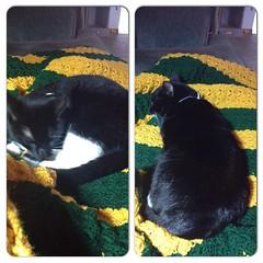 Moxie agrees that the blanket is done #crochet #c2c #corner2corner #greenbay #blanket