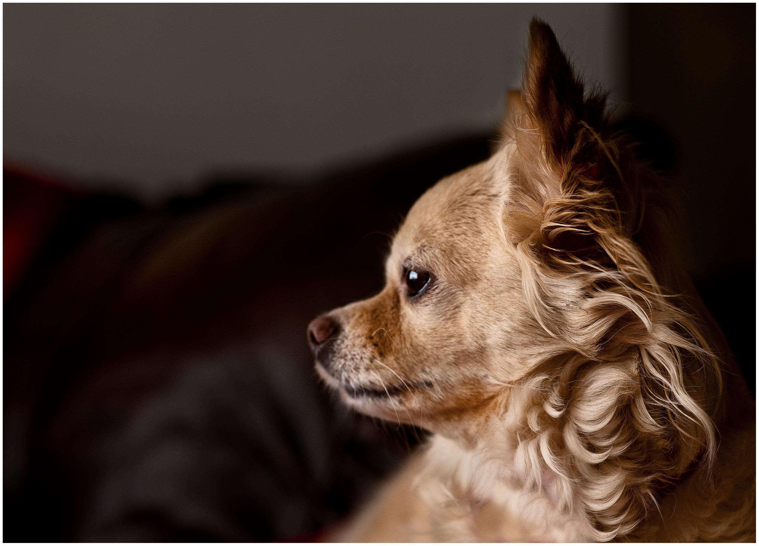 O Dog Hairstyle: Flickr - Photo Sharing