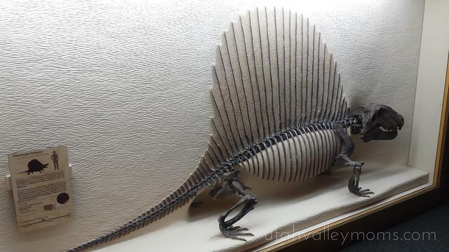 dinosaur museum 2