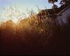 morning sun 2014