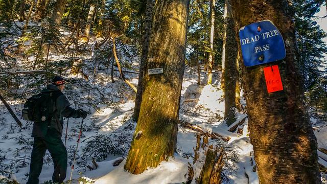 Dead Tree Pass