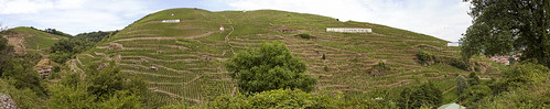 France - Cote Rotie vineyards