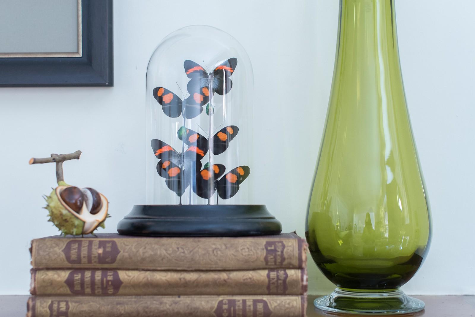 butterfly-globe (1 of 1)-2