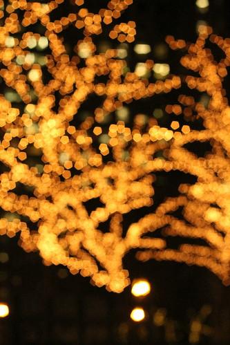 Boston Twinkle Lights